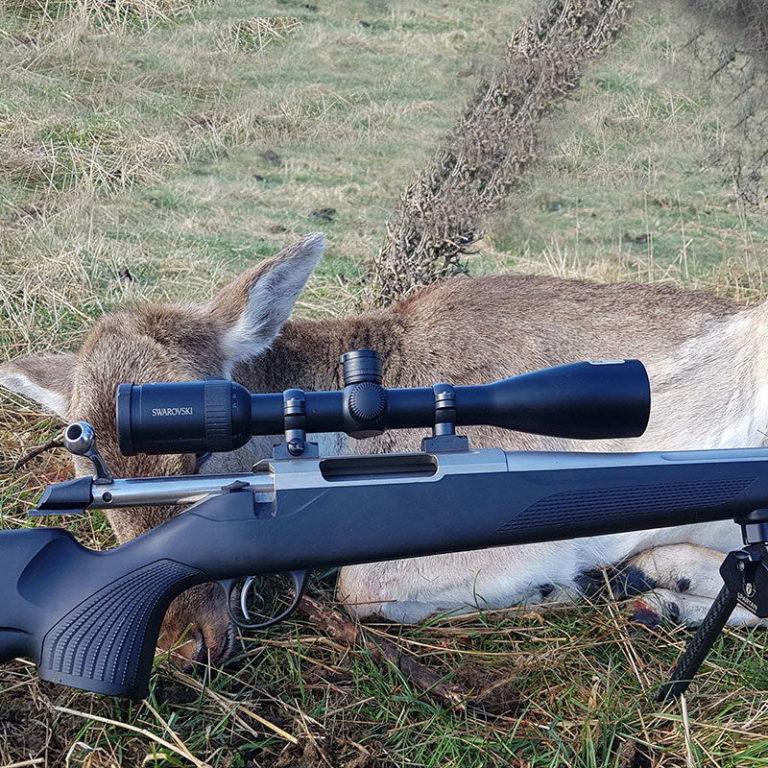 Deer Shooting Queenstown
