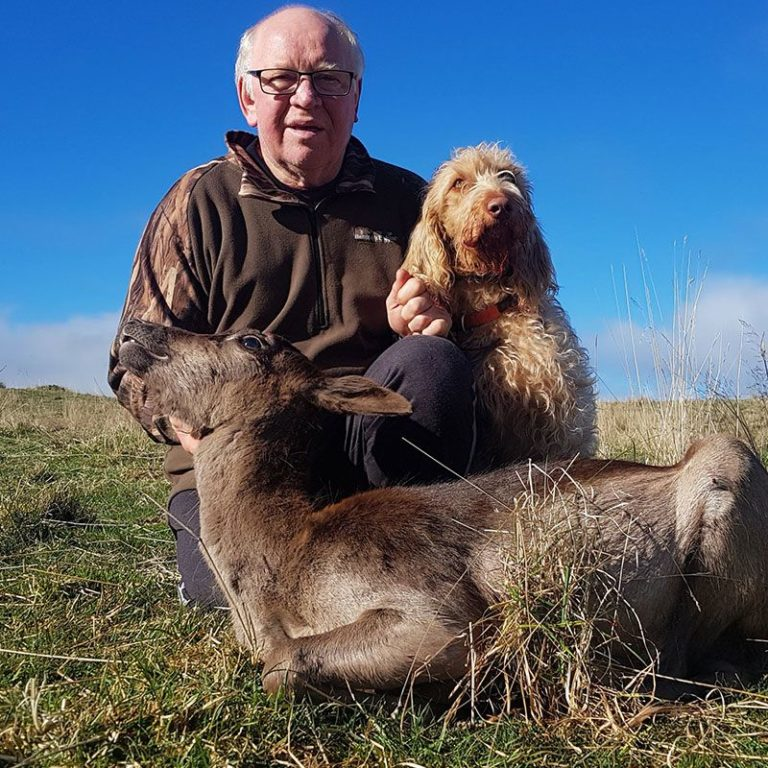 Dear hunting Queenstown